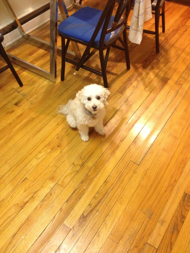 Stelly is a kitchen pup!  She waited patiently with me while the cookies baked in the oven.