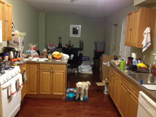 Just a little preview of our kitchen!  It's so big :)  Stelly is getting settled in.