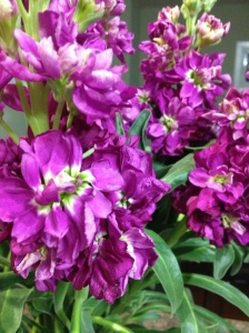 Dave bought me these gorgeous purple flowers from TJ's this week :)