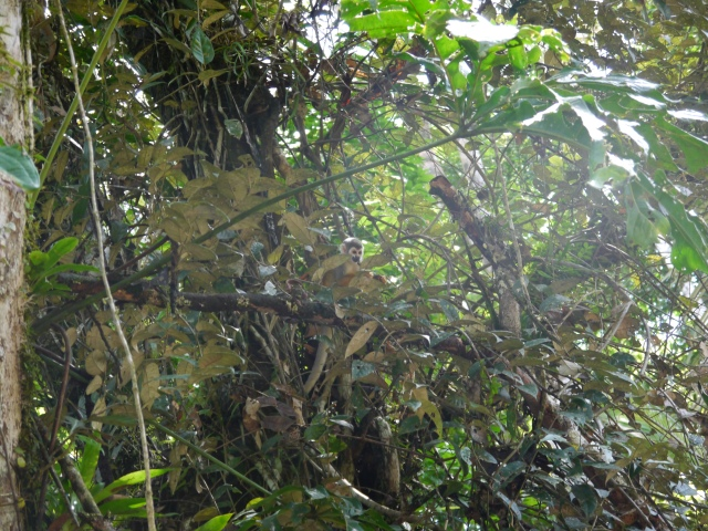 Can you see the monkey!? :)