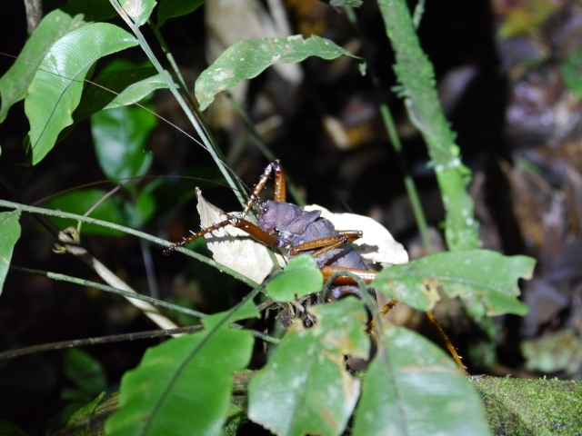 Just one of the sights as seen on our night hike in the jungle.  SCARY!