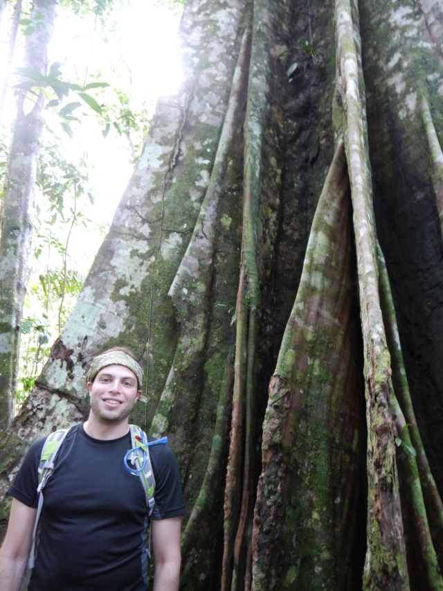 Our jungle day walk- check out that tree!